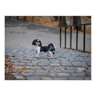Perro blanco y negro anuncio