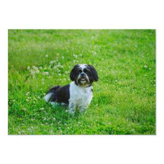 Perro blanco y negro comunicados