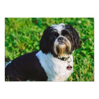 Perro blanco y negro comunicado