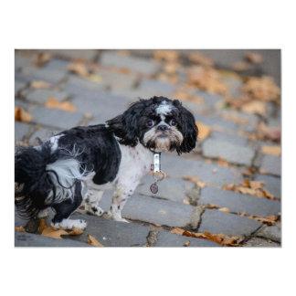 Perro blanco y negro invitacion personalizada