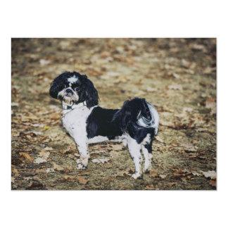 Perro blanco y negro invitación