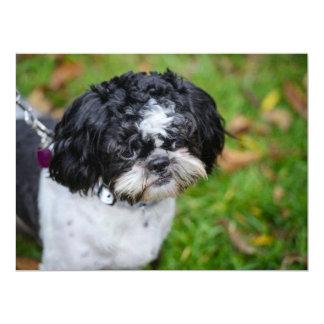 Perro blanco y negro comunicado personal