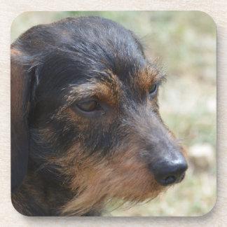Perro cabelludo de Daschund del alambre Posavasos De Bebidas