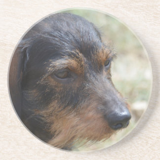 Perro cabelludo de Daschund del alambre Posavasos Diseño