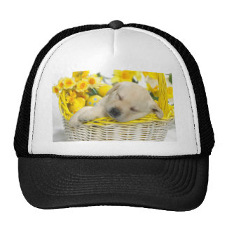 Perro cansado gorra