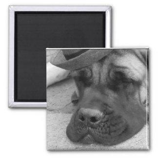 Perro cansado imán cuadrado