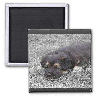 Perro cansado, personalizable imán cuadrado