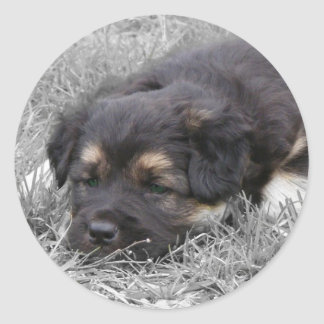 Perro cansado, personalizable pegatina redonda