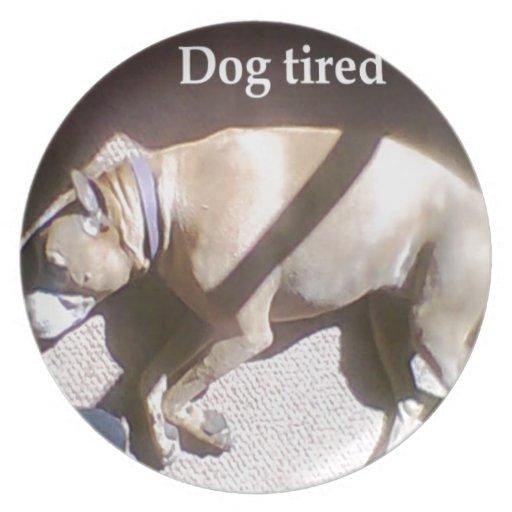 Perro cansado plato para fiesta