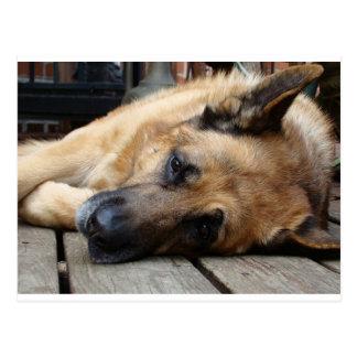 Perro cansado postal