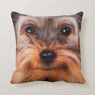 perro casero 10 de la almohada