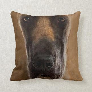 perro casero 16 de la almohada