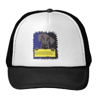 Perro casero que lleva a cabo una muestra gorros