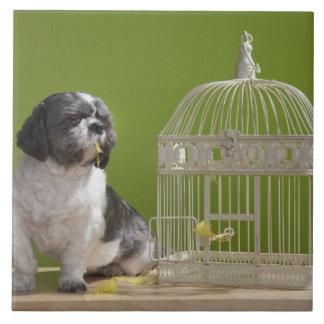 Perro cerca de una jaula de pájaros azulejo cuadrado grande