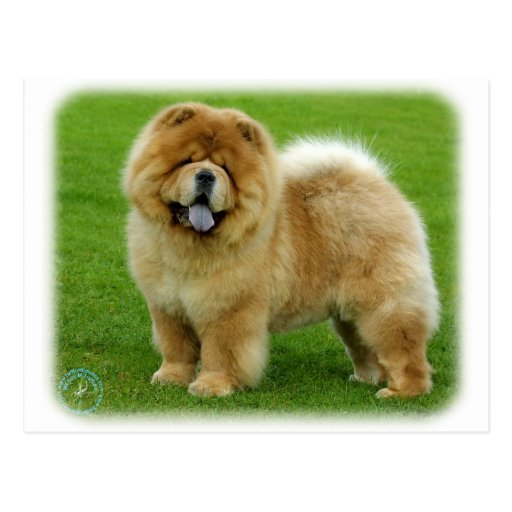 Perro chino de perro chino 9B008D-06 Tarjetas Postales