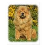 Perro chino de perro chino 9T096D-026_2 Postal
