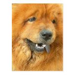 Perro chino de perro chino tarjetas postales