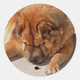 Perro chino fantástico y amigo pegatina redonda