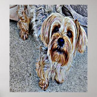 Perro coloreado Digital de Yorkie Póster