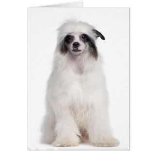 Perro con cresta chino (7 meses) tarjeta de felicitación
