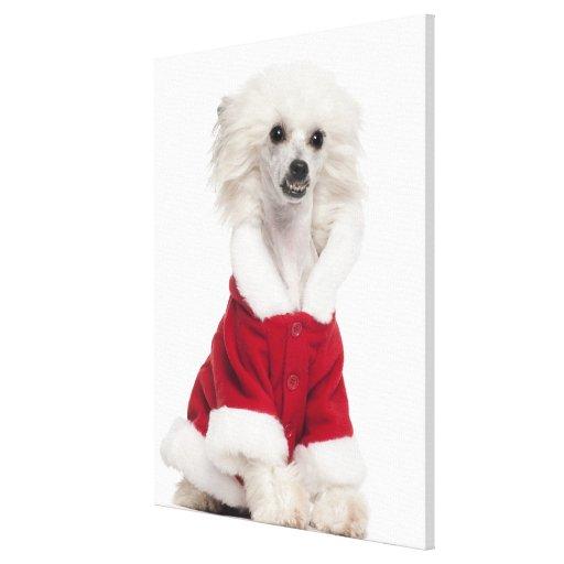 Perro con cresta chino a que lleva (de 1 año) impresion de lienzo