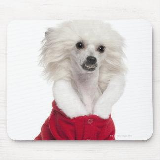 Perro con cresta chino a que lleva de 1 año alfombrillas de raton
