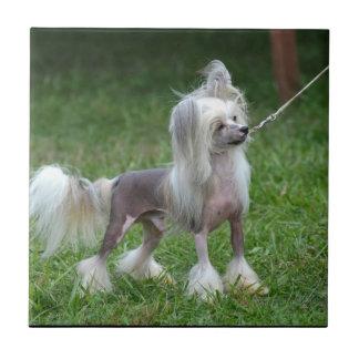 Perro con cresta chino alerta azulejo cuadrado pequeño