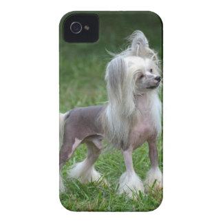 Perro con cresta chino alerta iPhone 4 coberturas