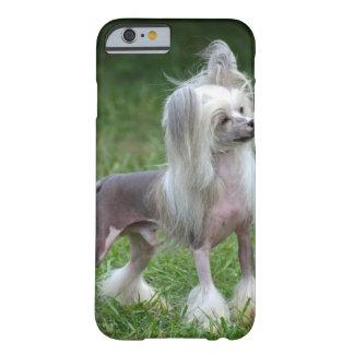 Perro con cresta chino alerta funda de iPhone 6 barely there