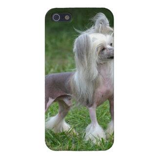 Perro con cresta chino alerta iPhone 5 cárcasas