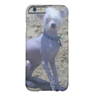 Perro con cresta chino funda de iPhone 6 barely there