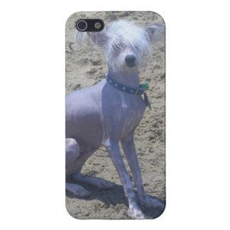Perro con cresta chino iPhone 5 cobertura