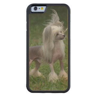 Perro con cresta chino lindo funda de iPhone 6 bumper arce