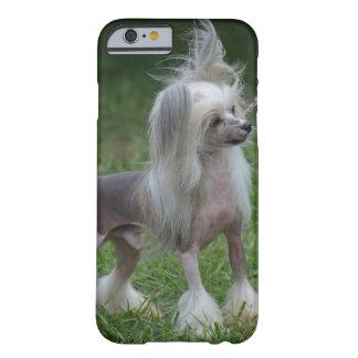 Perro con cresta chino lindo funda de iPhone 6 barely there