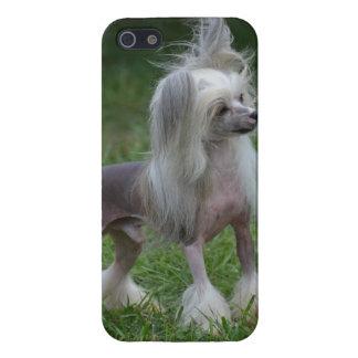 Perro con cresta chino lindo iPhone 5 cárcasas