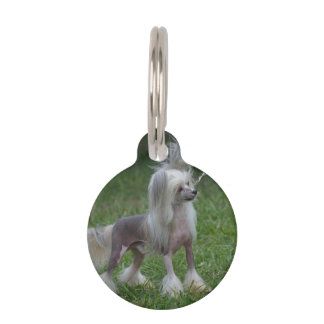 Perro con cresta chino lindo placa para mascotas