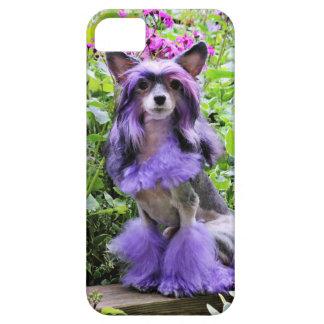 Perro con cresta chino púrpura en flores rosadas