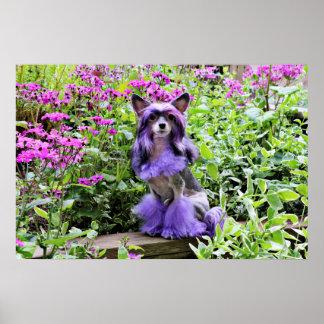 Perro con cresta chino púrpura en flores rosadas poster