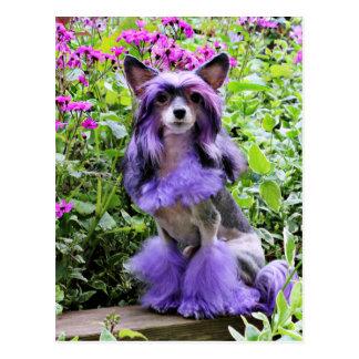 Perro con cresta chino púrpura en flores rosadas postales