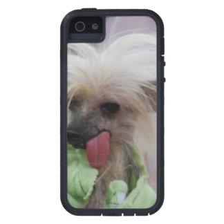Perro con cresta chino sin pelo iPhone 5 protector