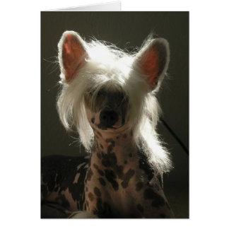 Perro con cresta chino tarjeta pequeña
