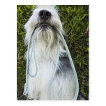 Perro con el correo en boca postal