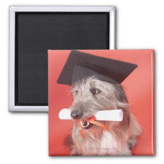 Perro con el mortarboard y el diploma imán cuadrado