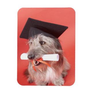 Perro con el mortarboard y el diploma imán foto rectangular