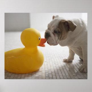 Perro con el pato plástico posters