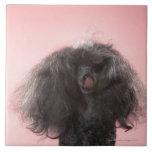 Perro con el pelo delante de la cara y de la lengu azulejos