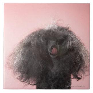 Perro con el pelo delante de la cara y de la lengu azulejo cuadrado grande