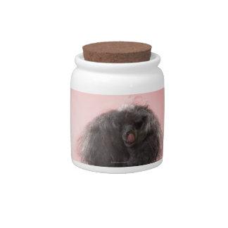 Perro con el pelo delante de la cara y de la lengu jarra para caramelo