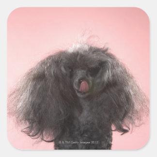 Perro con el pelo delante de la cara y de la pegatina cuadrada