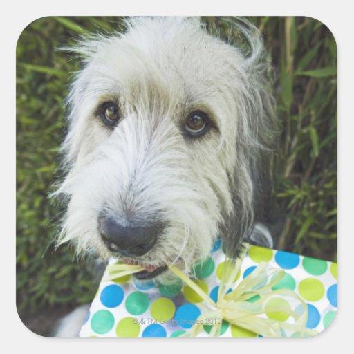 Perro con el regalo en boca calcomanía cuadradas personalizadas